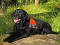 Truffle-sniffing dogs compete in tournament #Examinercom
