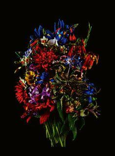 L'instant sensible : Fines Fleurs par Shiinoki Shunsuke  http://lemde.fr/1C70gjZ sur @lemonde_M