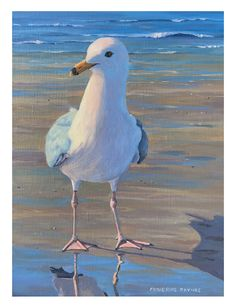 Most Recent - Catherine Raynes Watercolor Bird, Watercolor Paintings, Tortoise Drawing, Gulls, Cottage Art, Virtual Art, Shorebirds, Guache, Bird Drawings