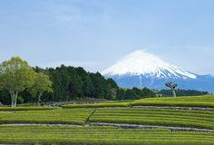 Oobuchi tea plantation and Mt.Fuji, Shizuoka, Japan