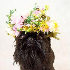 Dog Flower Crown Halloween costume