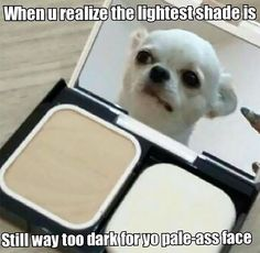 Pale people problems prove the struggle is real Photos) Foundation For Pale Skin, Mineral Foundation, Pale People, Makeup Humor, Photos On Facebook, Struggle Is Real, Makeup Routine, Animal Memes, Funny Animals