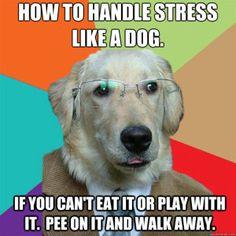 How To Handle Stress Like A Dog