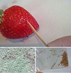 Envie de faire pousser des fraises dans votre jardin ? Voici une technique simple ! noté 4.5 - 2 votes Dès que c'est la saison, les gens se ruent sur les jolies fraises qui font leur apparition sur les étals des marchés. Ces petits fruits rouges au goût tout doux et sucré sont en effet...