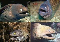 """Eels always look like they just told a joke and are waiting for a reaction."""