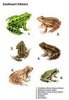 meester Frank :: meesterfrank-groep5.yurls.net Nature Animals, Animals And Pets, Baby Animals, All Nature, Science And Nature, Reptiles And Amphibians, Mammals, Animal Plates, Frog Illustration