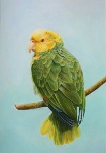 'Yellow Headed Amazon' by Pat Carlton