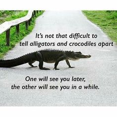 See you later Alligator ! In a while Crocodile ! See you later Alligator ! In a while Crocodile ! Animal Memes, Funny Animals, Animal Funnies, Funniest Animals, Animal Quotes, Zoo Animals, In A While Crocodile, See You Later Alligator, Pokemon