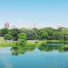 Central Park in summer, NYC