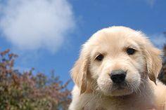 Antes de adquirir un perro