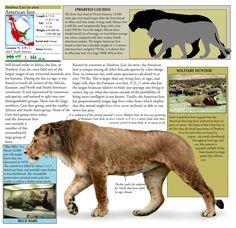 American Lion, or Panthera leo atrox, by Dantheman9758.