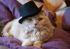Cats in the hats