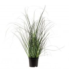 Intratuin kunstplant siergras D 17 H 32 cm Herbs, Plants, Products, Herb, Plant, Beauty Products, Planting, Planets
