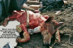 I am so sorry to have to share this, but we all need to see what happens. THEY ARE SKINNED ALIVE for their fur. Please do not buy real fur.