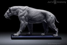 Smilodon Populator model, 1/6th scale - flesh & superficial muscle – Jun's anatomy