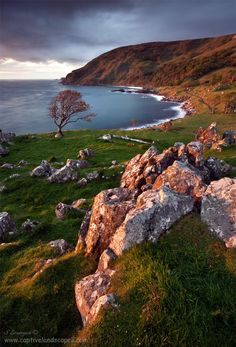 Morning light on Murlough Bay, Ireland with the old ruins of Drumnakill Church just in front of the tree.