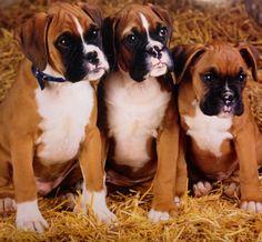 Beautiful Baby Boxers