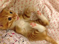 Playful ginger kitten