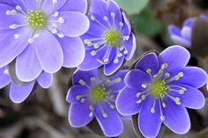 Fotos de flores, preciosas, bonitas, hermosas | Galerías de Fotos