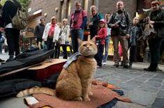 Bildergebnis für street cat bob