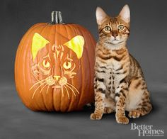 Free Pumpkin Carving Patterns & Templates - Driven by Decor