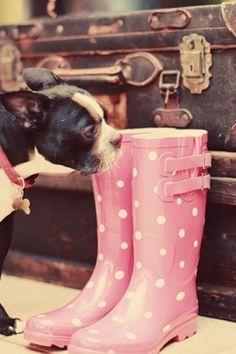 Polka dot rain boots! LOVE THIS