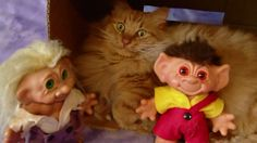 Norsk Skogkatt Norwegian Forest Cat theOfficial TST Troll Security Service Cat has captured two trolls that broke from their territory Denmark.  Don't worry the trolls have been turned to plastic with TST Cat eyes that emit powerful UV-Rays.