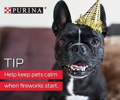 Fireworks and other #NewYearsEve noise-makers can be scary for pets. Keep them calm with relaxing music and keeping them in a quiet place. . . . . #dance #drink #play #celebrate #moet #bowery #downtown #event #vogue #bottleservice #club #lowereastside #nolita #springstreet #sweetandvicious #resolution #cheersenjoy #newyearsparty #ringinthenewyear #balldrop #happynewyear #dj #djseanb #newyearsevenew #fireworks #florida #dog #dogs