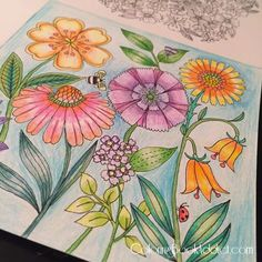 Free Coloring book pages for adults - Coloring Book Addict Flower Images, Flower Pictures, Colorful Pictures, Free Coloring, Adult Coloring, Adult Color By Number, Pen Store, Secret Garden Colouring, Shade Flowers