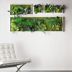 Фото 8478688 в коллекции Озеленение живыми и искуственными цветами - Оформление мероприятий Flora and Fauna