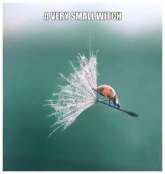 ゝ。A Very Small Witch.。Hee-hee !!!@!! ( ^‿~ )