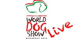 Watch live the World Dog Show 2013 - Hungary! Dog Show, Budapest Hungary, Live In The Now, Watch, News, World, Clock, Bracelet Watch, Clocks