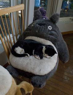 critters love totoro too. totoro looks scared. Crazy Cat Lady, Crazy Cats, I Love Cats, Cool Cats, My Neighbor Totoro, Mundo Animal, Here Kitty Kitty, Cats And Kittens, Fur Babies
