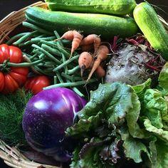 Raccolta importante ieri sera: barbabietole, zucchine, insalata, carote, pomodori e aneto