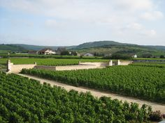 Chateaux Chassagne-Montrachet in Montrachet home to the finest Chardonnay in Burgundy France. Montrachet, Batard-Montrachet, and Chevalier-Montrachet are home to the Grand Vin Premier Cru White Chardonnay, (Route des Grands Crus). #wine