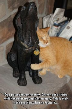 """""""Dog passed away recently. Owner got a statue with her collar around it in memory. This is their cat's reaction when he found it. Animals And Pets, Baby Animals, Funny Animals, Cute Animals, Animal Memes, Animals Planet, Cute Cats, Funny Cats, Tier Fotos"""