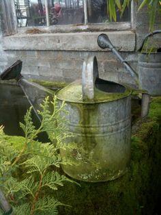 moss on old watering can Water Garden, Garden Pots, Potager Garden, Garden Shop, Galvanized Buckets, Galvanized Decor, Patio Pergola, Rustic Gardens, Down On The Farm