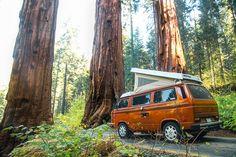 Martin Dugré (2) Sequoia NTl park, CA by GoWesty (Official) on Flickr.#Volkswagen #vw #vwt25 #vwt3 #vanagon #westy #westfalia #t25 #t3...
