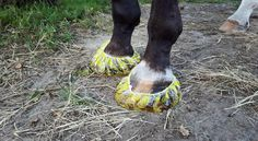 Disposable shower caps for soaking horse hooves, for horses that won't stand in a bucket.