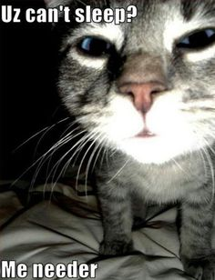 This pic reminds me of my cat that wakes me up in the middle of the night...