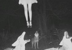 Wolf by night. My Photos / Submissions Grunge, Creepy Vintage, Southern Gothic, My Demons, Horror Art, Illustrations, Macabre, Werewolf, Graphic