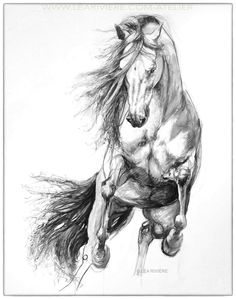 Drawing by Léa Rivière - Léa Rivière's drawing © Léa Rivière any reproduction in part or in total prohibited / - Rolando Saldaño Horse Pencil Drawing, Horse Drawings, Pencil Art, Animal Drawings, Art Drawings, Pencil Drawings, Pretty Horses, Beautiful Horses, Horse Sketch