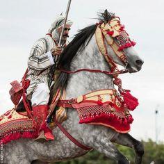 Moroccan Horse Tack (Tissa Horse Festival)