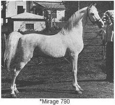 *Mirage. Foundation sire. Our first Arabian mare, Aazmarie, was of this lineage.