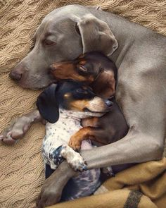 Any dogs and puppies that are cute. See more ideas about Cute Dogs, Cute puppies Tags: Animals And Pets, Baby Animals, Funny Animals, Cute Animals, Funny Dog Pictures, Animal Pictures, Beautiful Dogs, Animals Beautiful, Beautiful Family