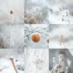 Frosty winter in Finland #winter #frost