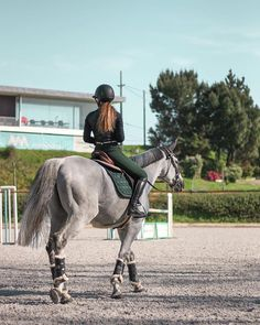 English Riding, Equestrian Outfits, Horse Training, Equine Photography, Vr, Animals And Pets, Scary, Portugal, Horses