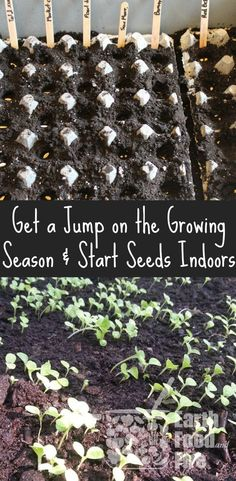Starting seeds indoors is a great way to get a jump on the growing season & access fresh food faster! So simple to do, this guide will teach you all the basics. via @earthfoodfire