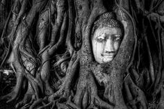 Spiritual Growth. Photo by Duey Moore — National Geographic Your Shot