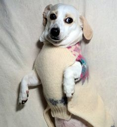 Felted dachshund coat wool for Christmas and by WarmWeenies